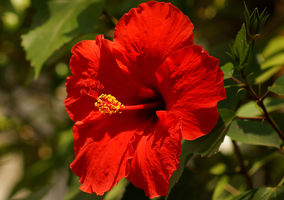 Florals in beauty the indian beauty blog - Hibiscus images download ...